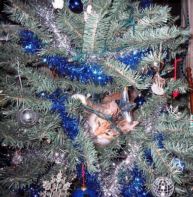 Merry Christmas Kitty Art Print by CGHepburn Scenic Photos