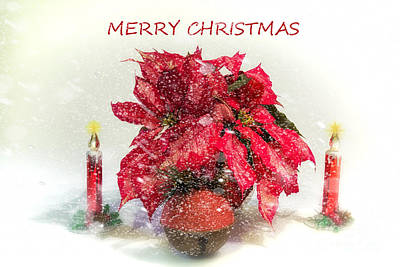 Photograph - Merry Christmas by Linda Blair