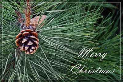 Photograph - Merry Christmas - Pine Cones by Nikolyn McDonald