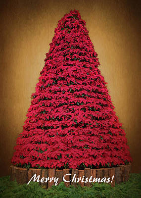 Photograph - Merry Christmas - Poinsettia Tree by Susan Rissi Tregoning