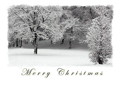 Martinspixs Photograph - Merry Christmas Snow And Trees  by Martin Matthews