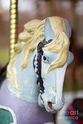 Photograph - Merry Go Round Horse by Edward Fielding