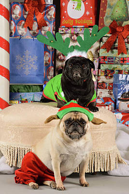 Mixed Media - Merry Pug-mas by Trish Tritz