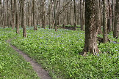 Photograph - Merwin Early Spring Path by Dylan Punke