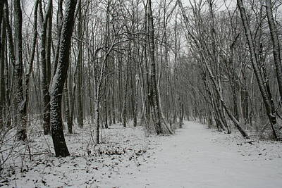 Merwin Snow Woods Art Print by Dylan Punke