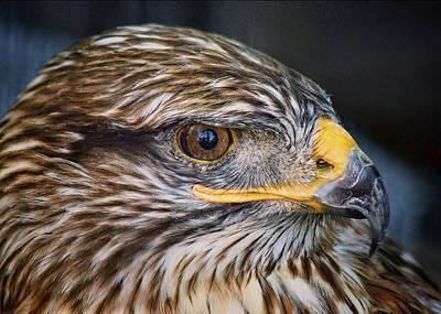 Photograph - Mesa - Ferruginous Hawk - Profile by Nikolyn McDonald
