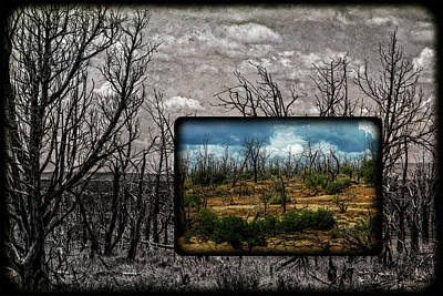 Photograph - Mesa Verde Burn Recovery by Mike Braun