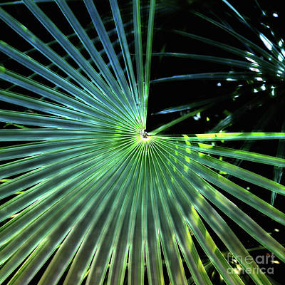 Photograph - Mesmerizing Palm Fronds by Carol Groenen