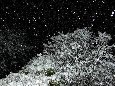 Radiant Image Photograph - Mesmerizing Snowfall  by Will Borden