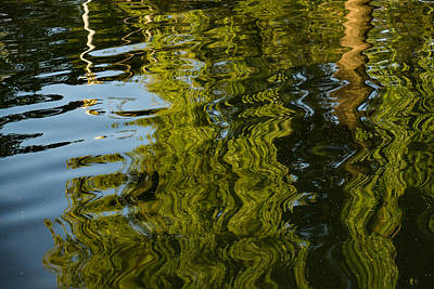 Photograph - Mesmerizing Summer - Reflecting On Green Trees - One by Georgia Mizuleva