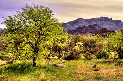 Photograph - Mesquite And Superstition Mountain Vista by Roger Passman