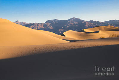 Photograph - Mesquite Dunes At Dawn by Suzanne Luft