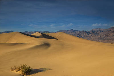 Photograph - Mesquite Dunes At Sunset by Kunal Mehra