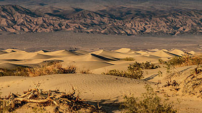 Photograph - Mesquite Dunes by Bill Gallagher