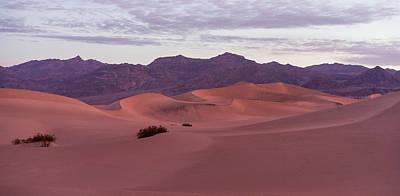 Photograph - Mesquite Dunes by Scott Rackers