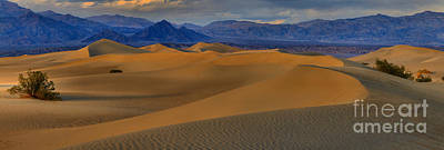 Photograph - Mesquite Dunes Sunset Panorama by Adam Jewell