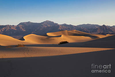 Photograph - Mesquite Dunes by Suzanne Luft
