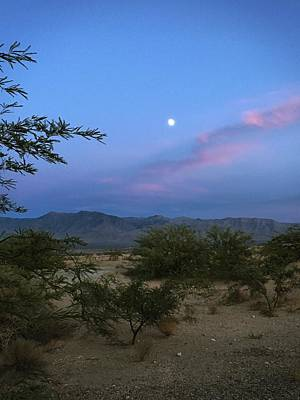 Photograph - Mesquite Moonrise No. 1 by Sandy Taylor