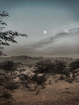 Photograph - Mesquite Moonrise No. 1-1 by Sandy Taylor
