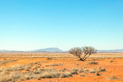 Photograph - Mesquite by SR Green
