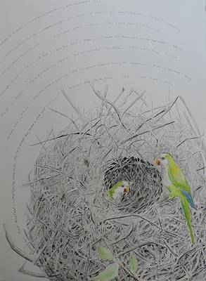 Parakeet Drawing - Message To The Birds by Mary Savage