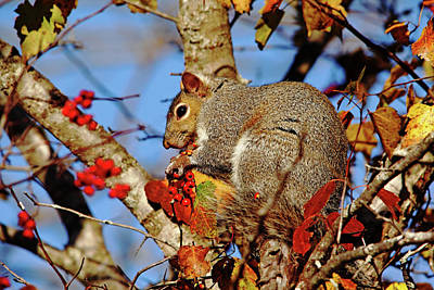 Photograph - Messy Eater by Debbie Oppermann