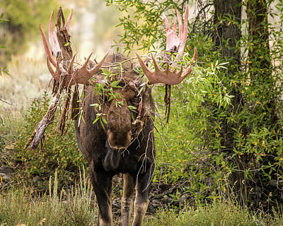 Art Print featuring the photograph Messy Moose by Mary Hone