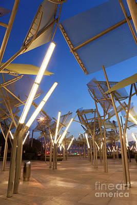 State Love Nancy Ingersoll - Metallic trees by Francisco Javier Gil Oreja