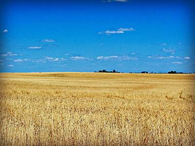 Metamora Photograph - Metamora Wheat Field by Mary Pille