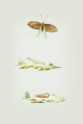 Mixed Media - Metamorphosis Of An Exotic Grass Caterpillar Into A Butterfly By Cornelis Markee 1763 by Cornelis Markee