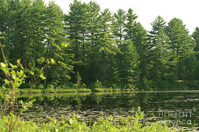 Photograph - Mew Lake Algonquin Park by Elaine Mikkelstrup
