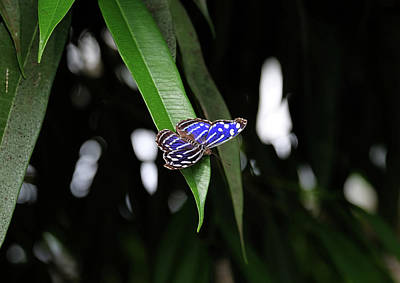 Photograph - Mexican Blue by Ronda Ryan