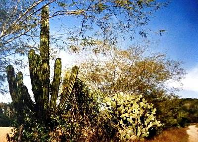 Photograph - Mexican Country Road by Will Borden