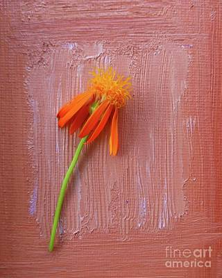 Photograph - Mexican Flame by Barbie Corbett-Newmin