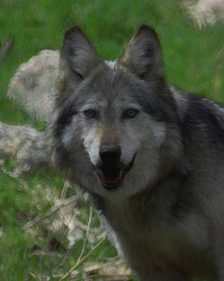 Wild Dog Digital Art - Mexican Gray Wolf Dp by Ernie Echols