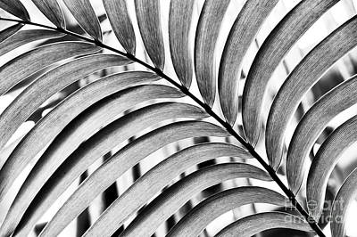 Photograph - Mexican Horncone Leaf Monochrome  by Tim Gainey