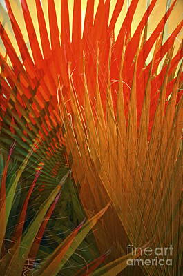 Mexican Palm Art Print by Gwyn Newcombe