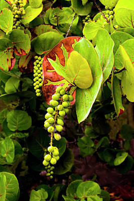 Photograph - Mexican Sea Grape by Susan Vineyard