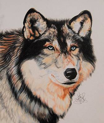 Painting - Mexican Wolf Hybrid by Cheryl Poland