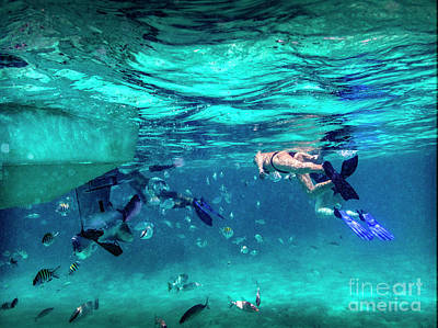 Photograph - Mexico Rocks Snorkeling With Fish by David Zanzinger