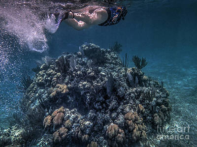 Photograph - Mexico Rocks Snorkler  Coral Sea Scape by David Zanzinger