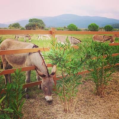 Donkey Family Original by Alessio Cicalini
