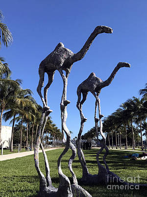 Photograph - Miami Beach Camels by Andrew Dinh