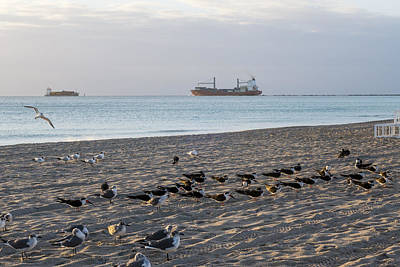 Photograph - Miami Beach Flock Of Birds Sunrise by Toby McGuire