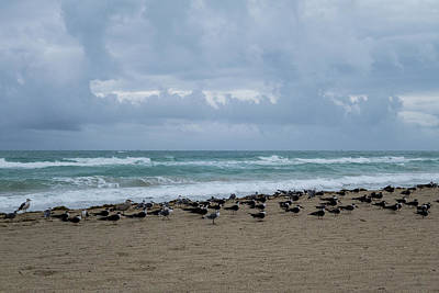 Photograph - Miami Beach Flock Of Birds by Toby McGuire