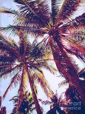 Photograph - Miami Beach Palm Trees by France Laliberte