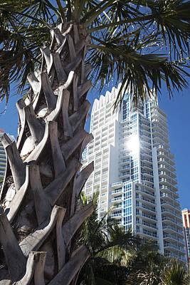 Miami Beach Skyscraper Palm Tree Art Print