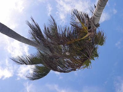 Photograph - Miami Palms by JAMART Photography