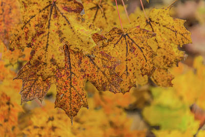 Photograph - Michigan Autumn  by Pravin Sitaraman