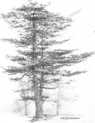 Michigan-eastern White Pine Art Print
